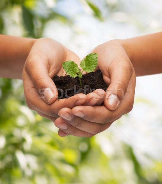 Vrouw handen plant bodem vruchtbaarheid Stockfoto © dolgachov