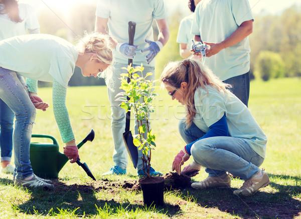 Photo stock: Groupe · bénévoles · arbre · parc · bénévolat