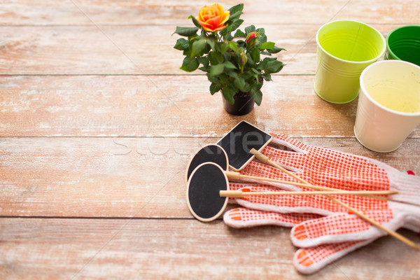 close up of rose flower and garden tools on table Stock photo © dolgachov