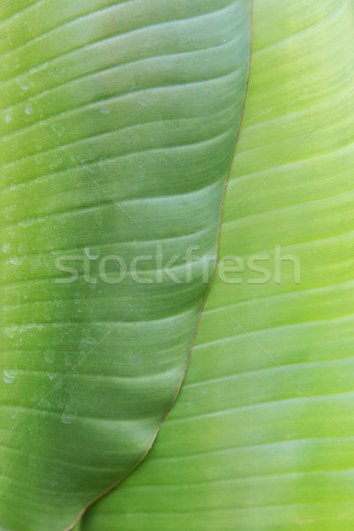 green palm tree leaf Stock photo © dolgachov