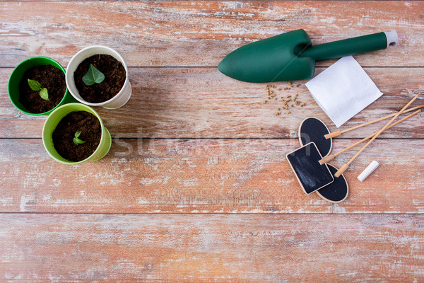саженцы садоводства саду семян Сток-фото © dolgachov
