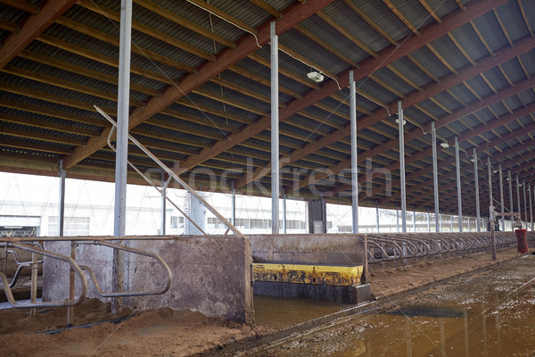 cowshed stable on dairy farm Stock photo © dolgachov