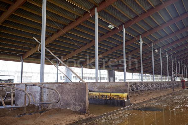 Estable lácteo granja agricultura industria Foto stock © dolgachov