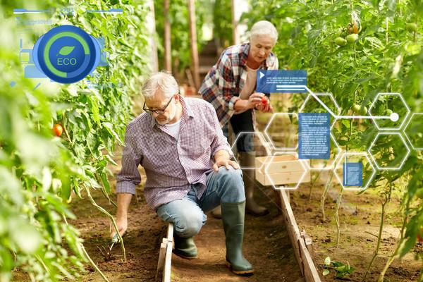 Werken boerderij broeikas organisch Stockfoto © dolgachov