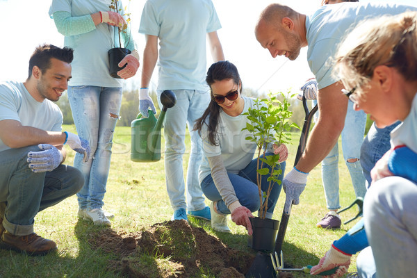 Stock photo: group of volunteers planting tree in park