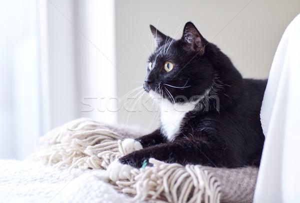 Blanco negro gato casa mascotas Foto stock © dolgachov