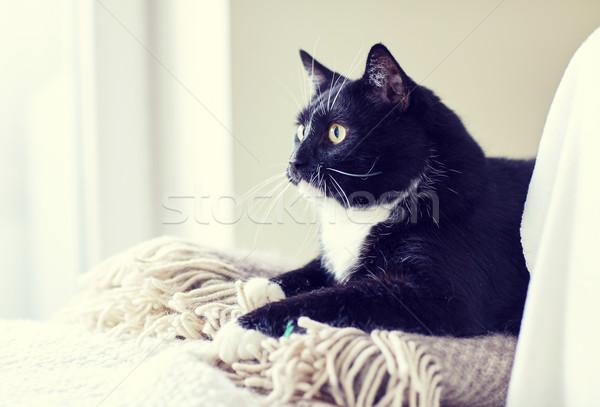 Feketefehér macska kockás otthon díszállatok háziállatok Stock fotó © dolgachov