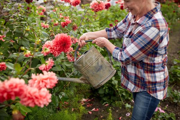 ストックフォト: シニア · 女性 · 水まき · 花 · 夏 · 庭園