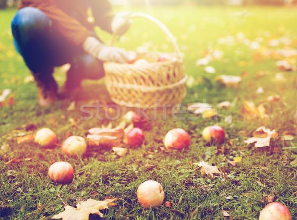 Nő kosár szőlőszüret almák ősz kert Stock fotó © dolgachov