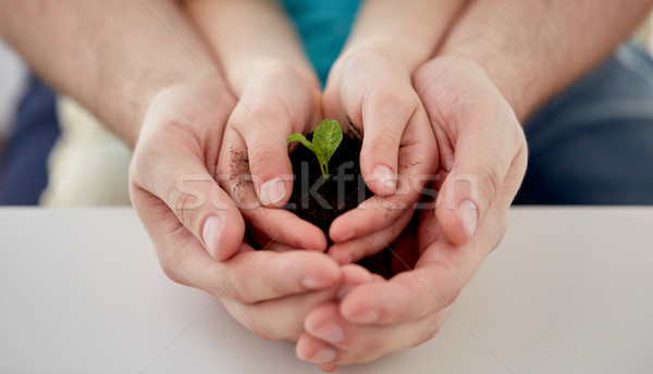 close up of father and girl hands holding sprout Stock photo © dolgachov