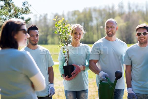 Grup ağaç fide park gönüllü Stok fotoğraf © dolgachov