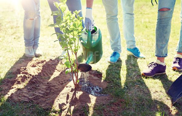 Groupe bénévoles arbre bénévolat Photo stock © dolgachov