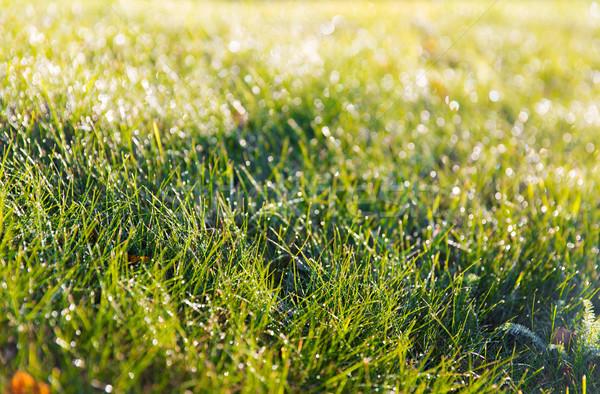 緑の草 露 自然 シーズン 環境 ストックフォト © dolgachov