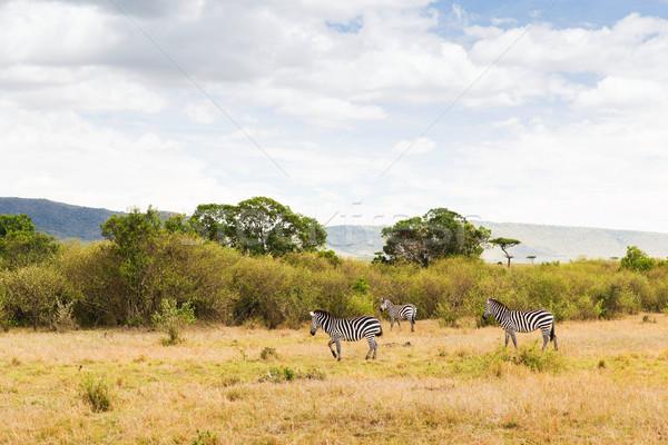 Nyáj zebrák szavanna Afrika állat természet Stock fotó © dolgachov