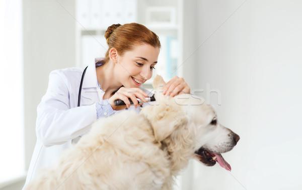 happy doctor with otoscope and dog at vet clinic Stock photo © dolgachov