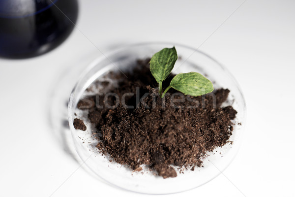 工場 土壌 ラボ 科学 生物 ストックフォト © dolgachov