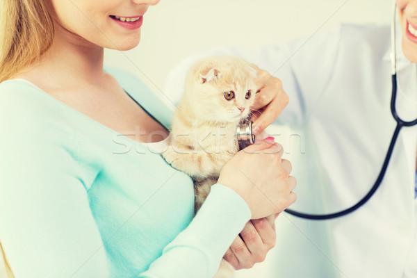 Сток-фото: ветеринар · стетоскоп · кошки · клинике · медицина