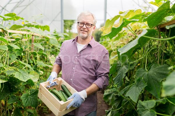 Viejo pepinos hasta granja invernadero Foto stock © dolgachov