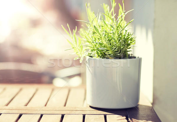 green plant in flower pot on street cafe table Stock photo © dolgachov