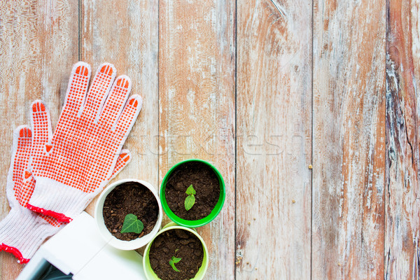 Plántulas jardín guantes jardinería Foto stock © dolgachov