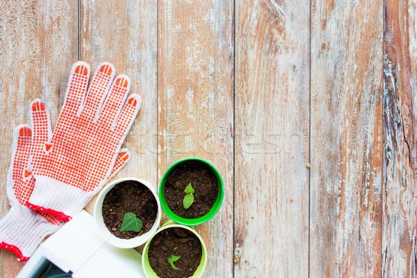 саженцы саду перчатки садоводства Сток-фото © dolgachov