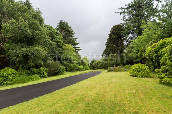 アスファルト 道路 アイルランド 旅行 自然 ストックフォト © dolgachov