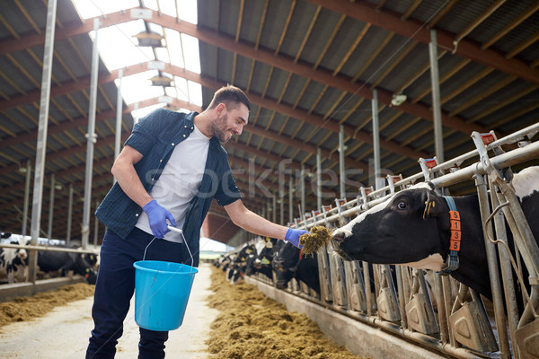 man feeding cows with hay in cowshed on dairy farm Stock photo © dolgachov