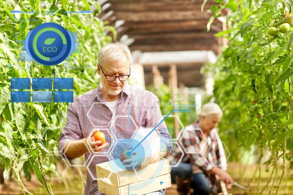 Viejo tomates hasta granja invernadero Foto stock © dolgachov