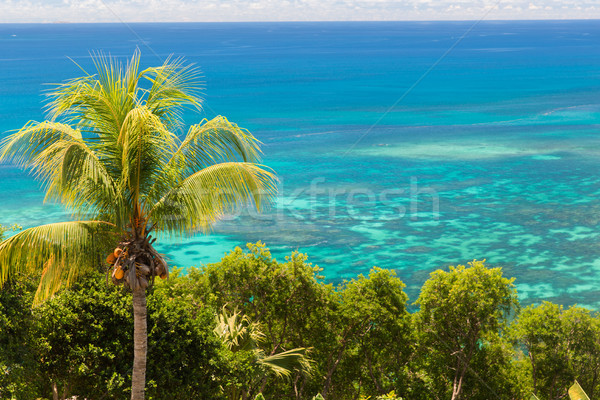 view to indian ocean from island with palm tree Stock photo © dolgachov