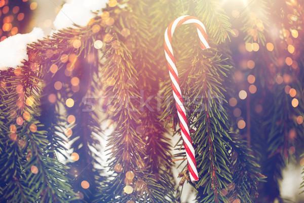 candy cane christmas toy on fir tree branch Stock photo © dolgachov