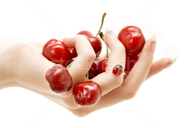 hand full of red cherries Stock photo © dolgachov