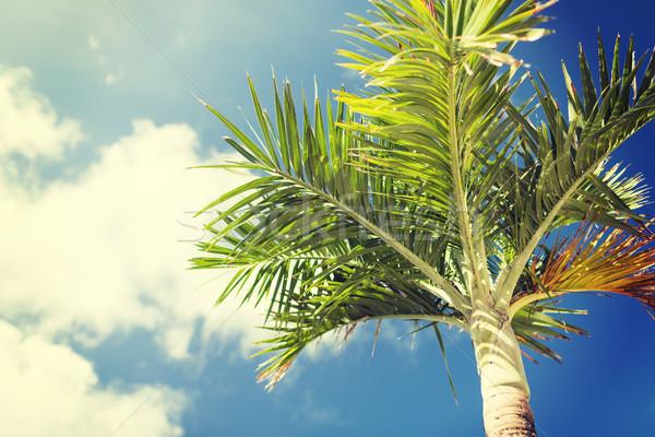 Palme blauer Himmel weiß Wolken Urlaub Natur Stock foto © dolgachov