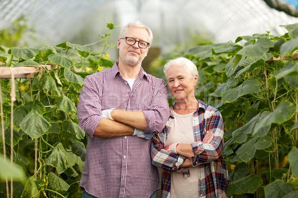 Szczęśliwy starszy para gospodarstwa szklarnia ogrodnictwo Zdjęcia stock © dolgachov