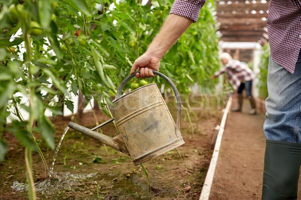Altos hombre regadera granja invernadero Foto stock © dolgachov