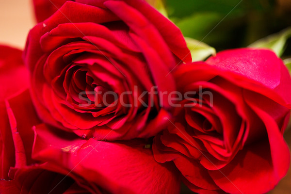 close up of red roses bunch Stock photo © dolgachov
