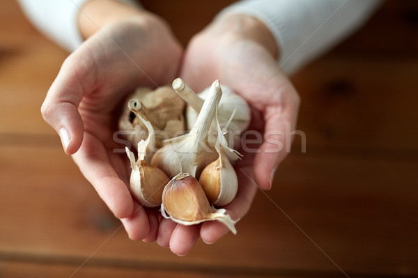 woman hands holding garlic Stock photo © dolgachov