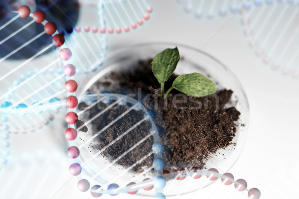 close up of plant and soil in lab Stock photo © dolgachov