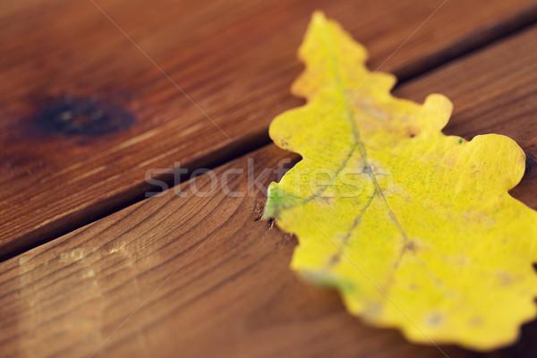 Geel eik najaar blad hout Stockfoto © dolgachov