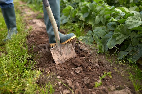 farmer with shovel digging garden bed or farm Stock photo © dolgachov