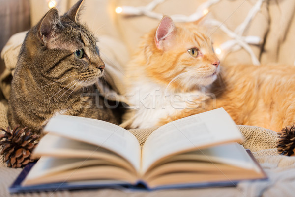 two cats lying on sofa with book at home Stock photo © dolgachov