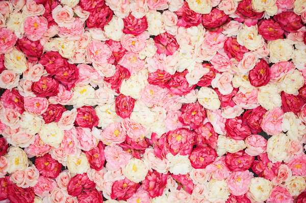 background full of white and pink peonies Stock photo © dolgachov