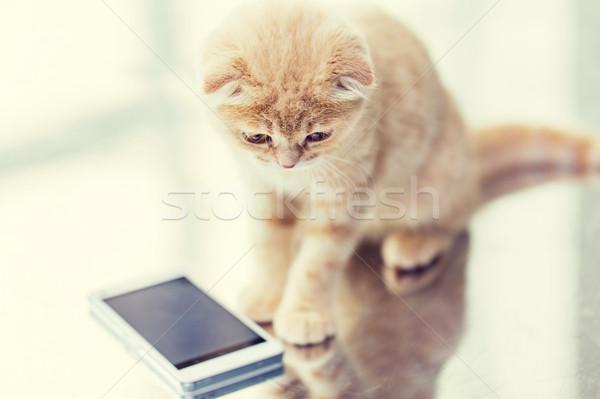 close up of scottish fold kitten with smartphone Stock photo © dolgachov