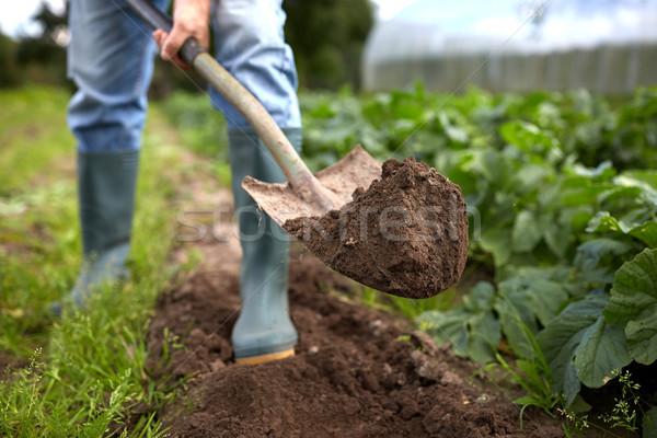 man with shovel digging garden bed or farm Stock photo © dolgachov