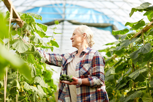 old woman picking cucumbers up at farm greenhouse Stock photo © dolgachov