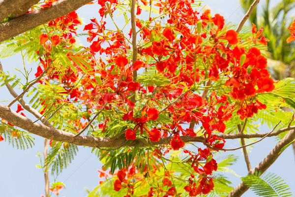 Flores llama árbol aire libre jardinería naturaleza Foto stock © dolgachov