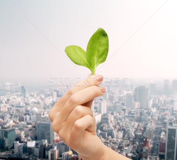 Stok fotoğraf: Kadın · el · yeşil · insanlar