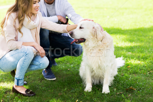 Stock photo: close up of couple with labrador dog outdoors