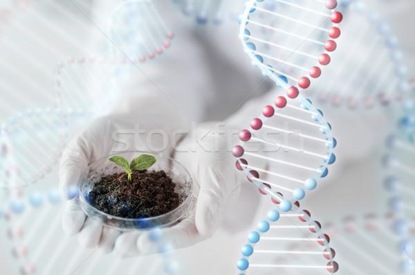 Scientifique mains usine sol science Photo stock © dolgachov