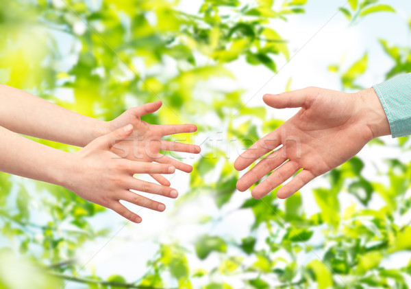 father and child hands over green leaves Stock photo © dolgachov