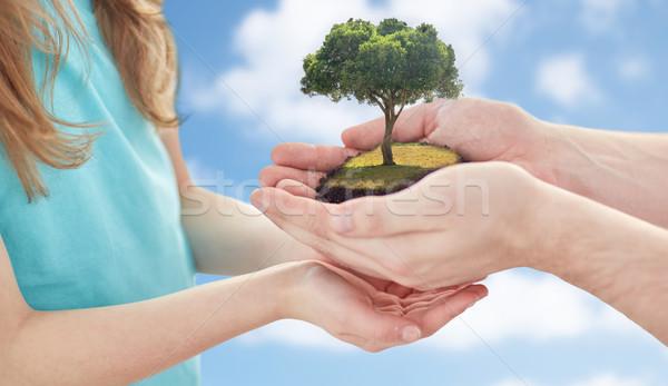 Közelkép apa lány kezek tölgyfa föld napja Stock fotó © dolgachov